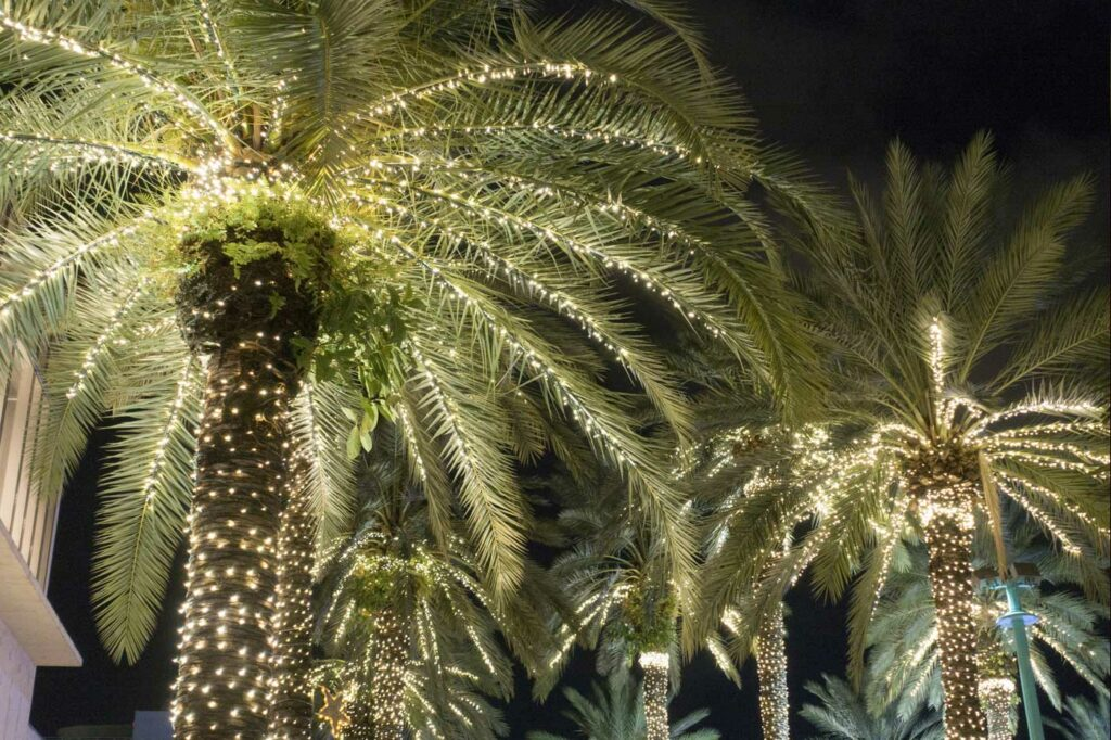 Jacksonville and Orange Park Florida holiday events