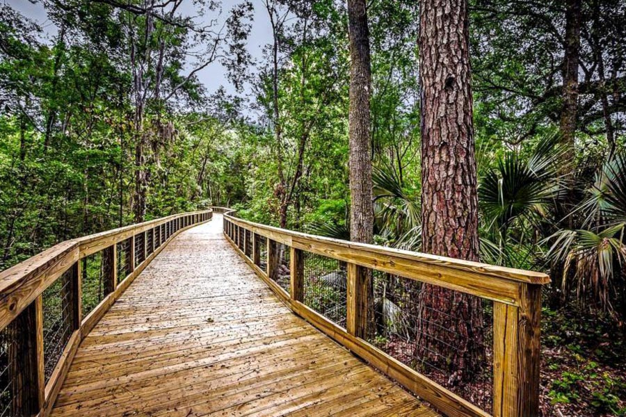 Tree Hill Nature Center boardwalk